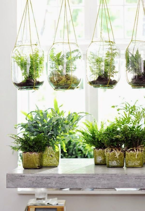 5 Hacks You Need To Know When Buying Plants